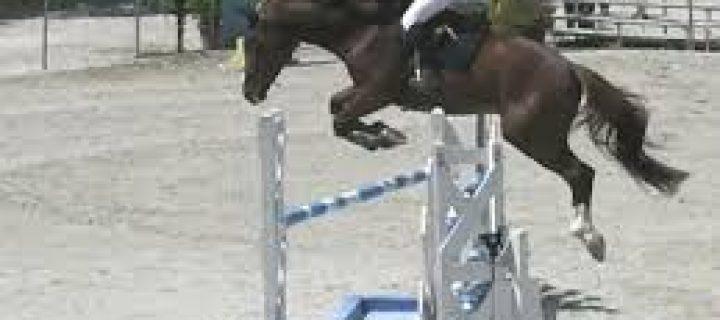 La pratique du cheval comme sport